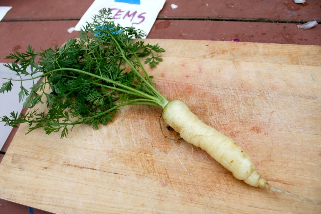 Trying Garden Carrots