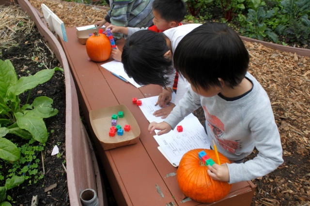 Measuring Pumpkins with Linker Cubes