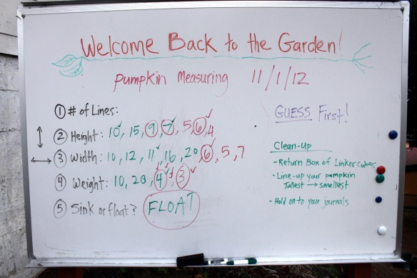 Our Class Results for Pumpkin Measurements