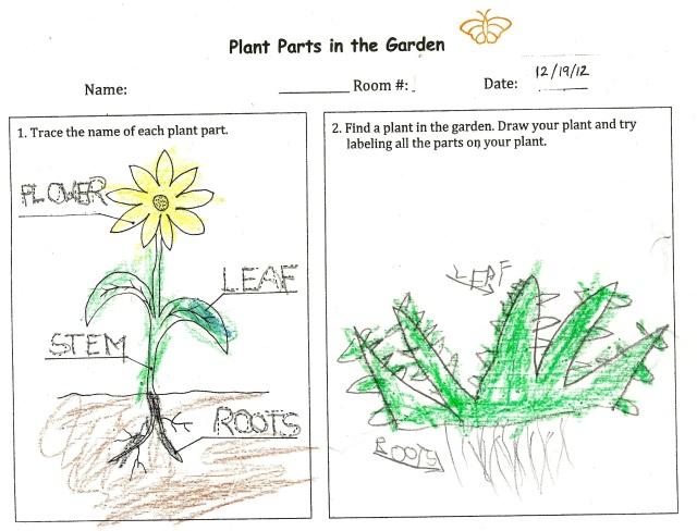 PlantPartsAloe(K)