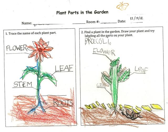 PlantPartsBroccoli(K)