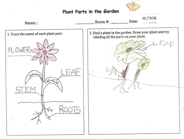 PlantPartsCoralBellLeaf(K)