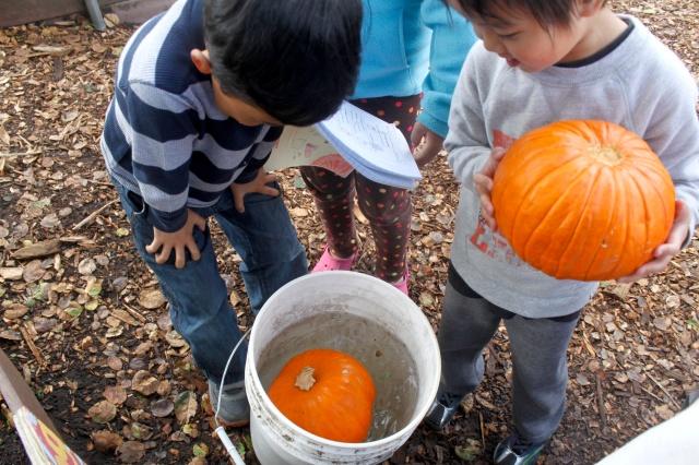 Sink or Float Pumpkin Test