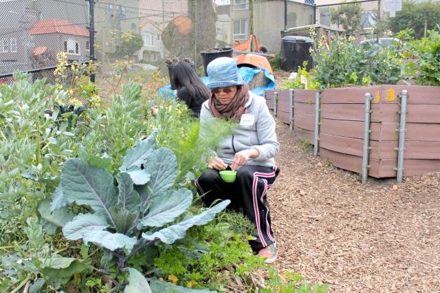 Herb Harvesting