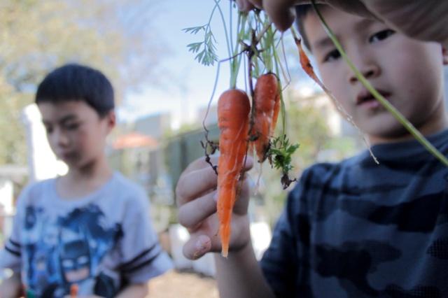 Carrot Bunch