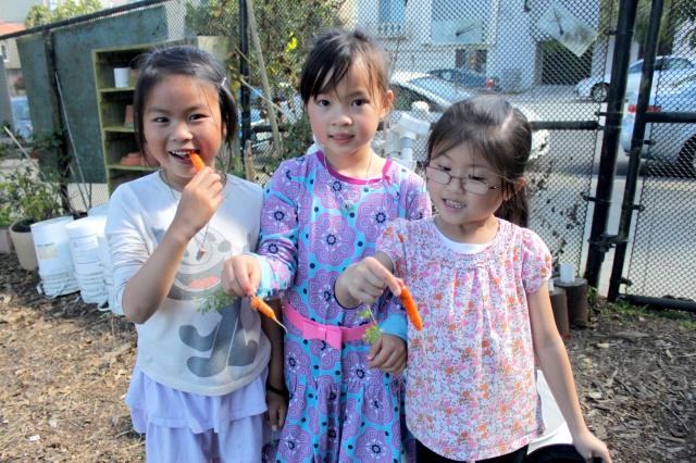 Carrot Snacks