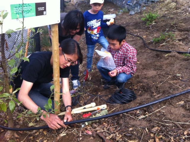 Jennifer Louie and her family along with Ms. Fung installing irrigation on the hillside. Photo by Sarah Richards