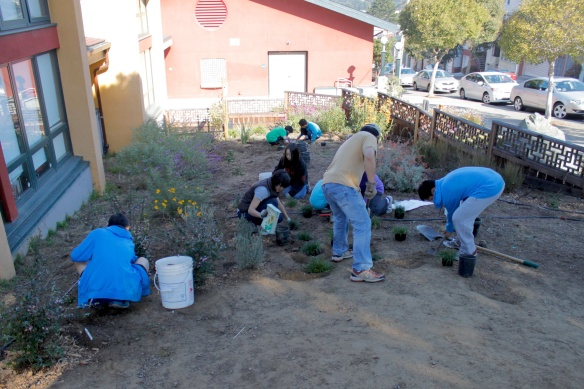 Finishing Up the Lower Middle School Entry Planting