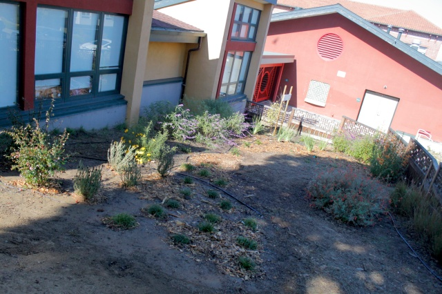 Our Finished and Irrigated Plantings for Today