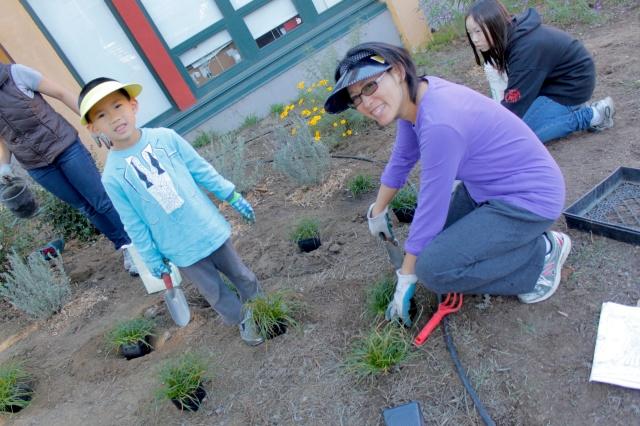 Planting Berkeley Sedge