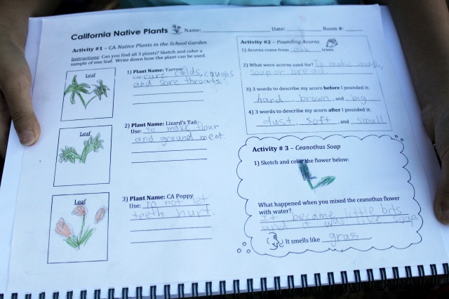 California Native Plants Worksheet