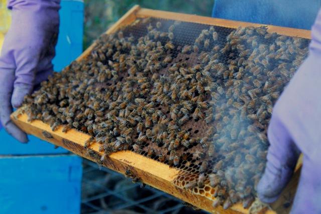 Planet Bee School Bee Hive