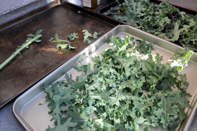 Kale Prepped on Baking Pans. Photo by Ms. Fung.