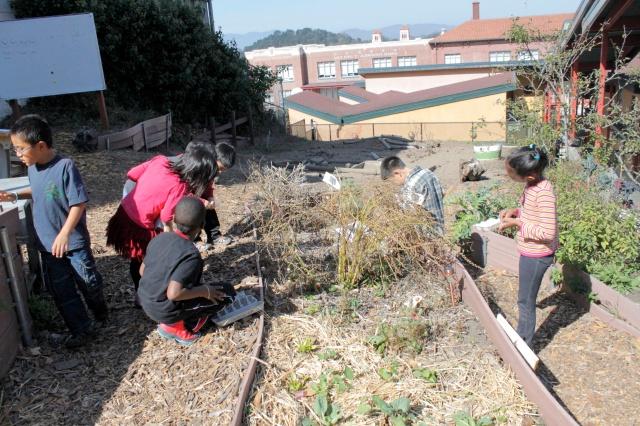 Saving Chard and Nigella Seeds