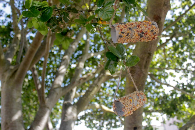 Bird Feeders in the Oak Tree (Photo by Patty Fung)