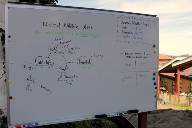 Kindergarten Wildlife Habitat Brainstorm