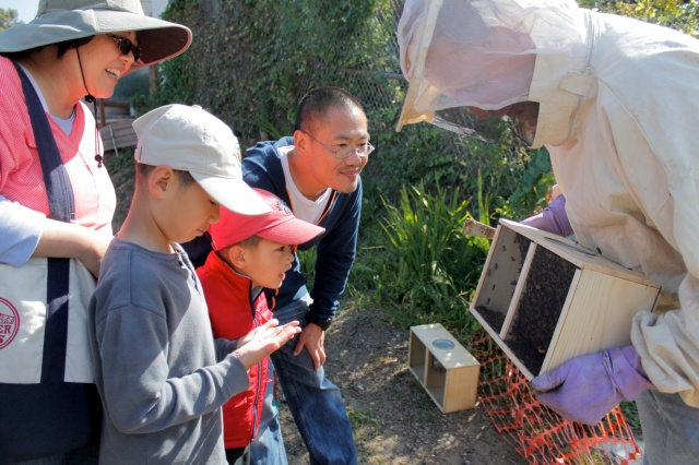 Looking at New Bees (Photo By Patty Fung)