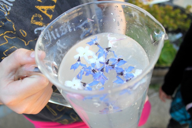 Borage and Jasmine Lemonade Photo By Patty Fung