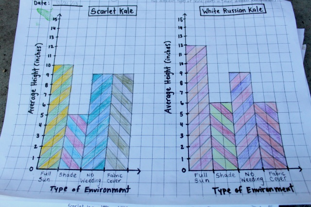 Kale Experiment Graphs (Photo by Patty Fung)